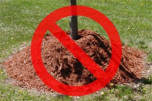 tree-mulch-wrong